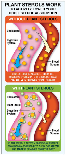 Up For Debate Plant Sterols For Cholesterol Reduction